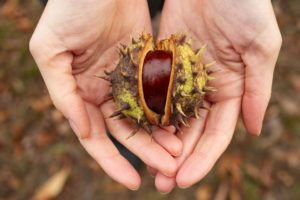 Chestnuts – Greenwich Park, London