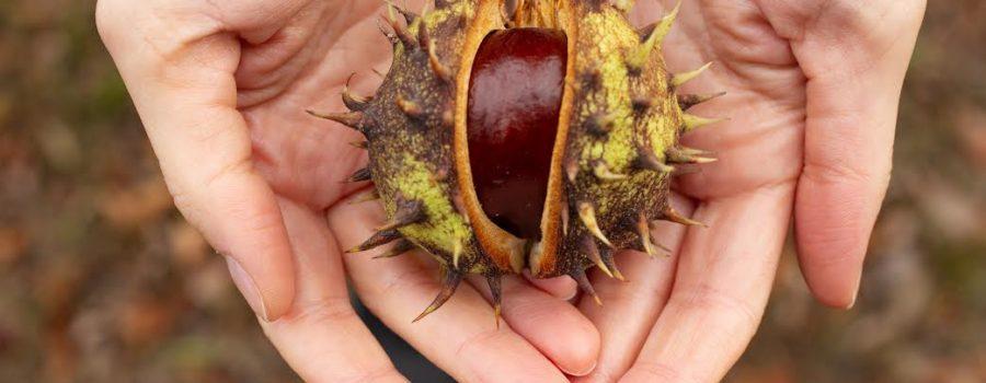Chestnuts – Greenwich Park, London