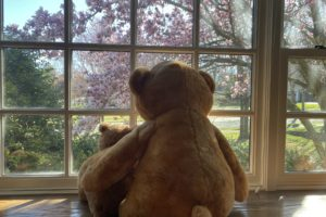 A tale of two teddys